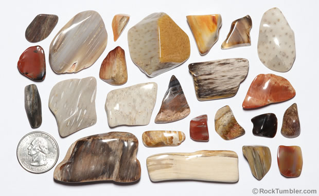 Polished petrified wood
