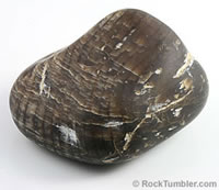 petrified-wood-thumb